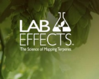Lab Effects