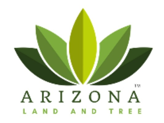 Tucson's Best Choice for Tree Trimming & Maintenance